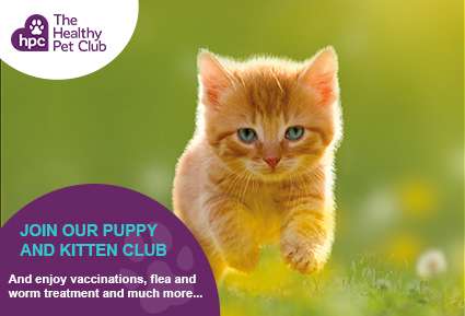 Join the Healthy Pet Club kittens