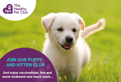 Join the Healthy Pet Club puppies
